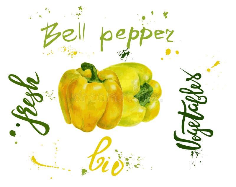 Insieme del peperone dolce di vettore giallo Pittura disegnata a mano dell'acquerello sul fondo bianco, illustrazione dell'alimen royalty illustrazione gratis