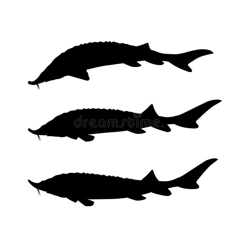 Insieme del pesce dello storione royalty illustrazione gratis