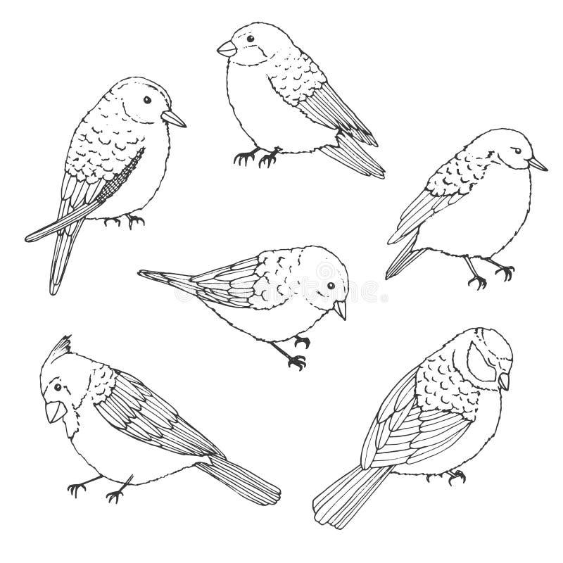 Insieme del profilo degli uccelli di vettore Raccolta d'annata degli scarabocchi nello stile di schizzo illustrazione di stock