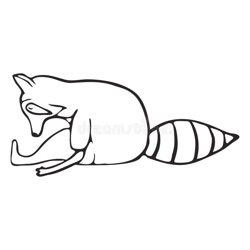 Insieme del profilo di scarabocchio del procione fare yoga royalty illustrazione gratis