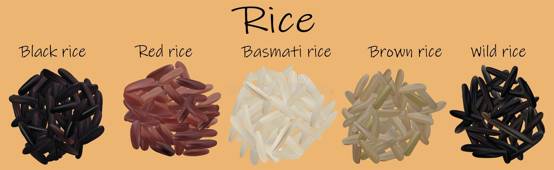 Insieme del riso Nero, rosso, Basmati, marrone, selvaggio Illustrazione di Vectric 3d, primo piano del riso royalty illustrazione gratis