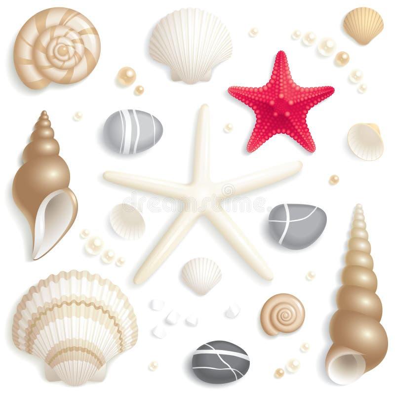 Insieme del Seashell fotografia stock libera da diritti