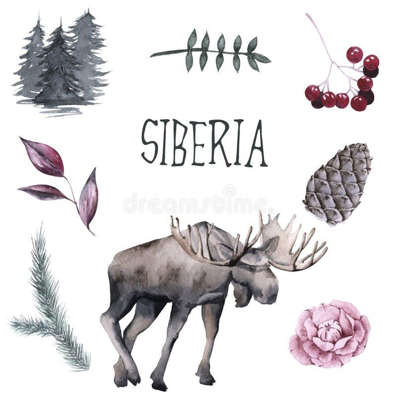 Insieme del siberiano Alci, rami delle piante Isolato su priorità bassa bianca illustrazione vettoriale