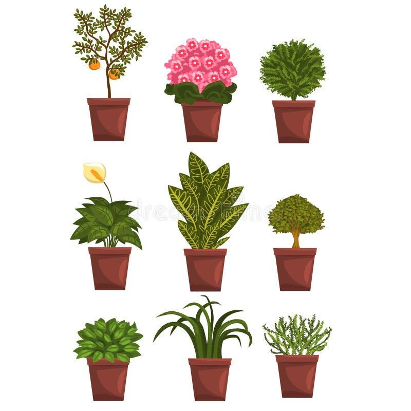 Insieme del vaso deciduo, di fioritura, delle piante da frutto con i fiori e delle foglie Anturio, mandarino, viola, bonsai, fico illustrazione vettoriale