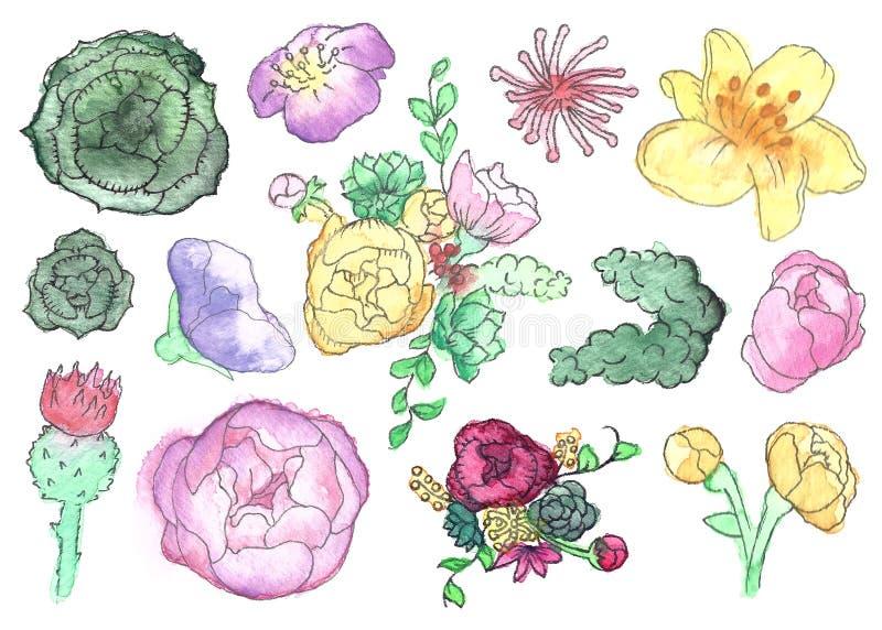 Insieme del Wildflower e del succulente dell'acquerello isolato illustrazione vettoriale
