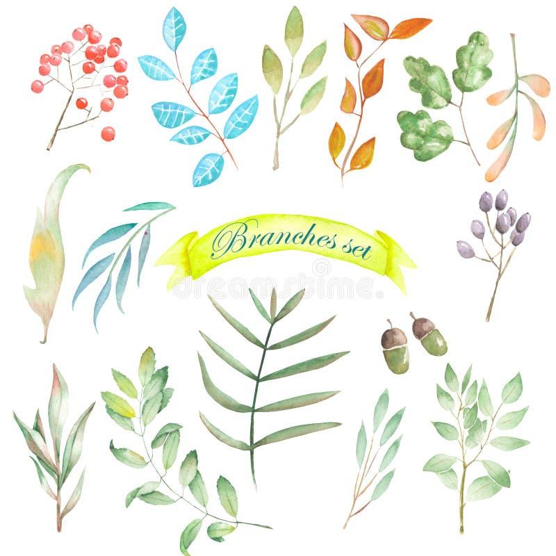 Insieme dell'acquerello degli elementi, dei rami e delle foglie floreali royalty illustrazione gratis