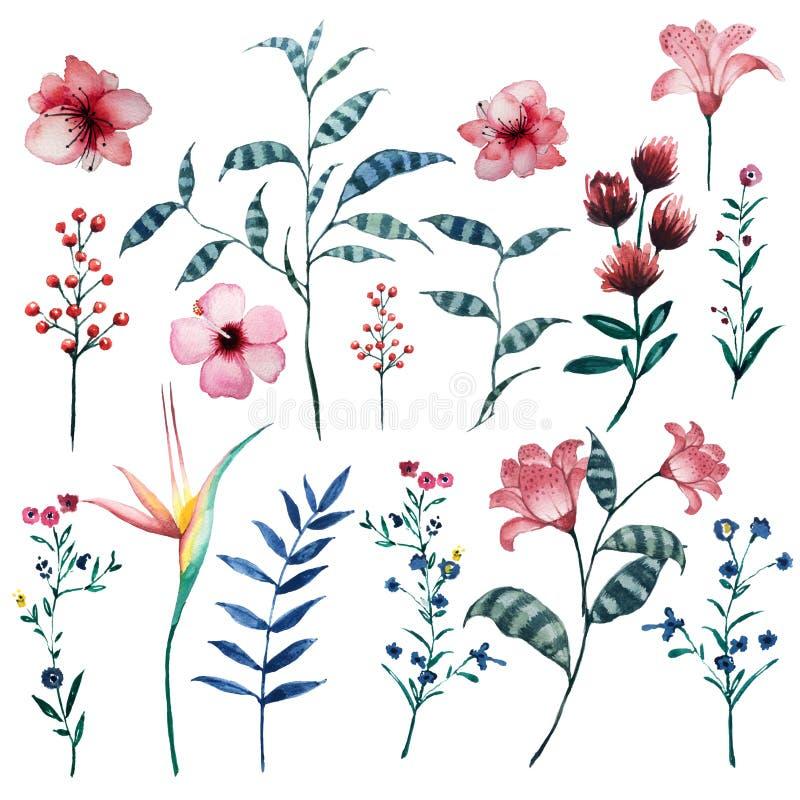 Insieme dell'acquerello degli elementi naturali tropicali floreali d'annata illustrazione vettoriale