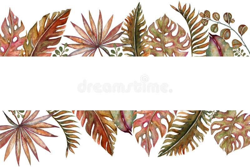 Insieme dell'acquerello degli elementi naturali tropicali floreali d'annata Fiori, ramoscelli e foglie esotici Classico luminoso  royalty illustrazione gratis