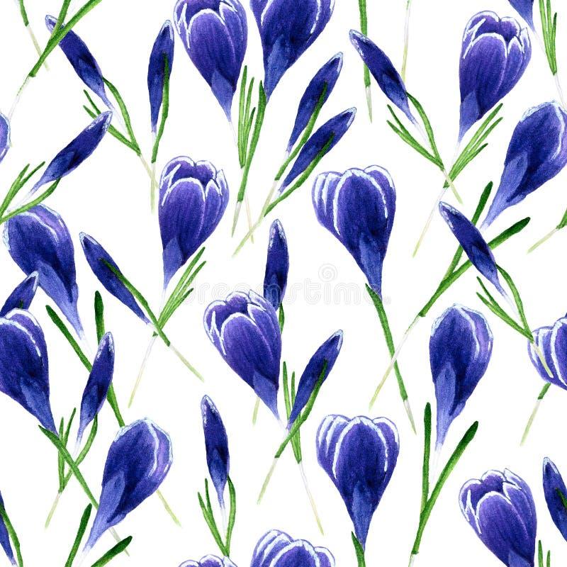Insieme dell'acquerello dei fiori della primavera Modello dei croco Progetti gli elementi per fondo, l'insegna, progettazione di  illustrazione vettoriale