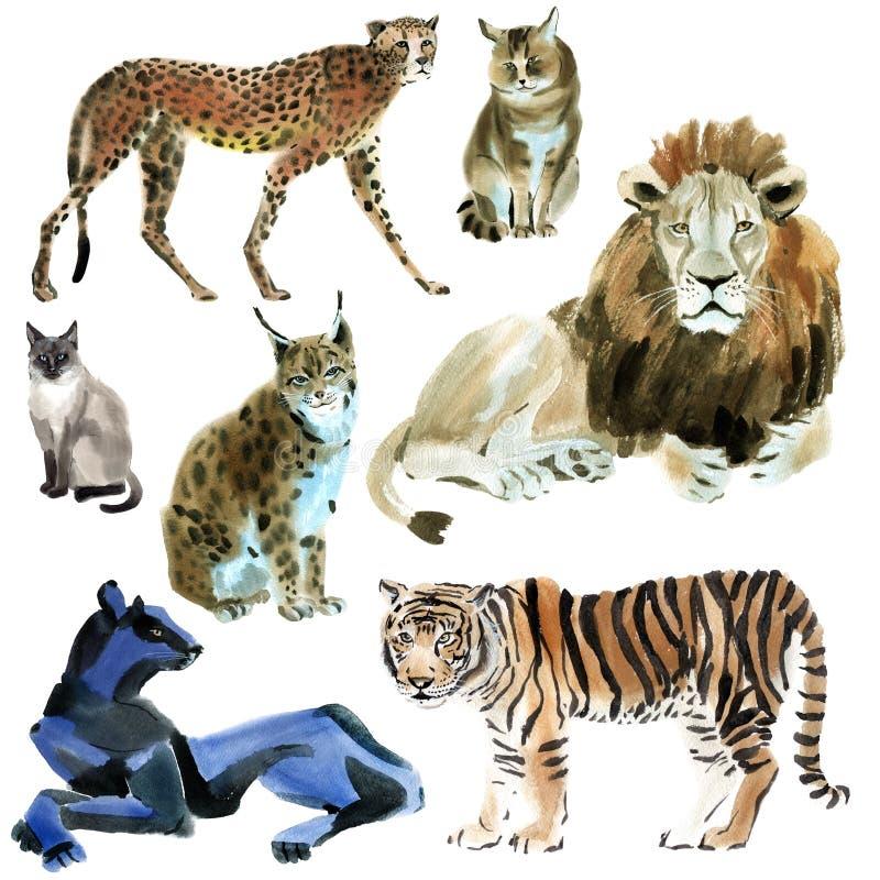 Insieme dell'acquerello dei gatti selvaggi illustrazione di stock