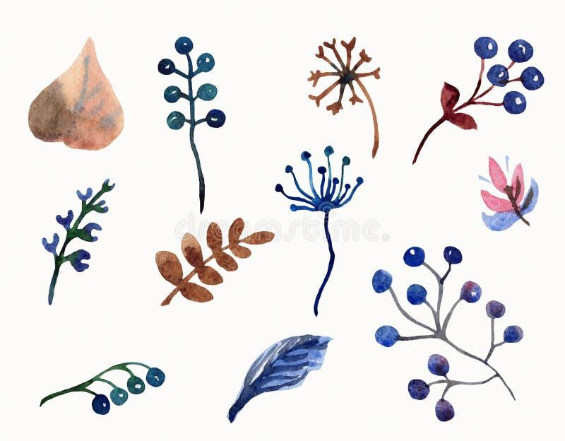 Insieme dell'acquerello delle foglie, dei rami e delle bacche dei fiori illustrazione di stock