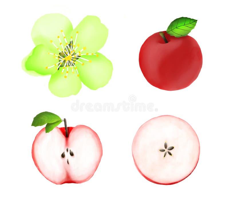 Insieme dell'acquerello delle mele rosse, fette, fiore immagine stock
