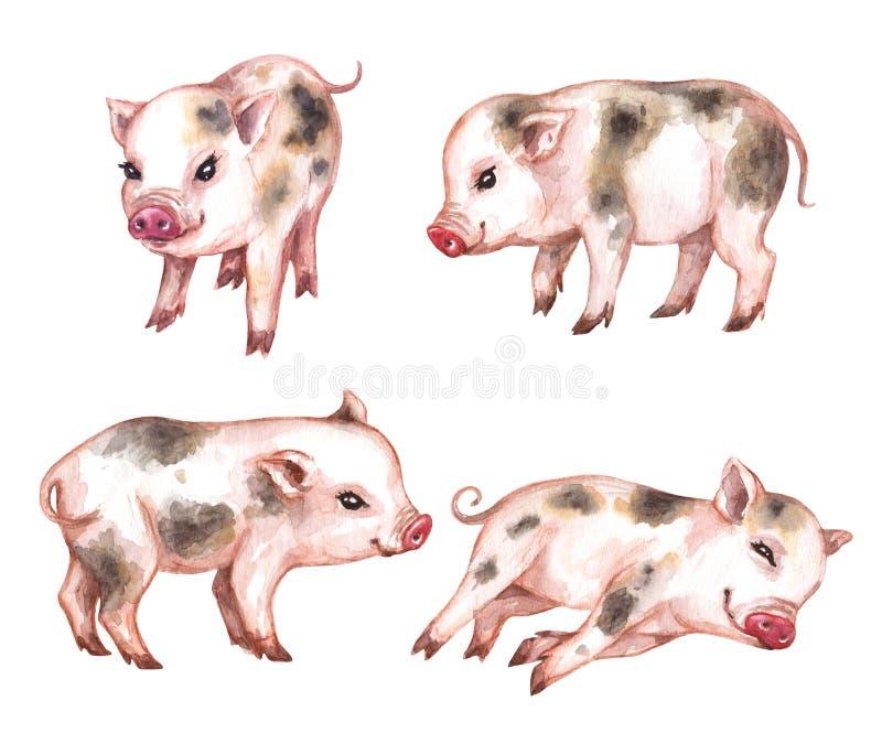 Insieme dell'acquerello di micro maiali illustrazione vettoriale