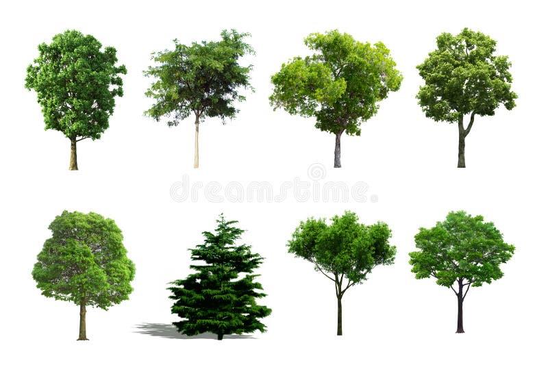 Insieme dell'albero isolato su fondo bianco fotografia stock libera da diritti