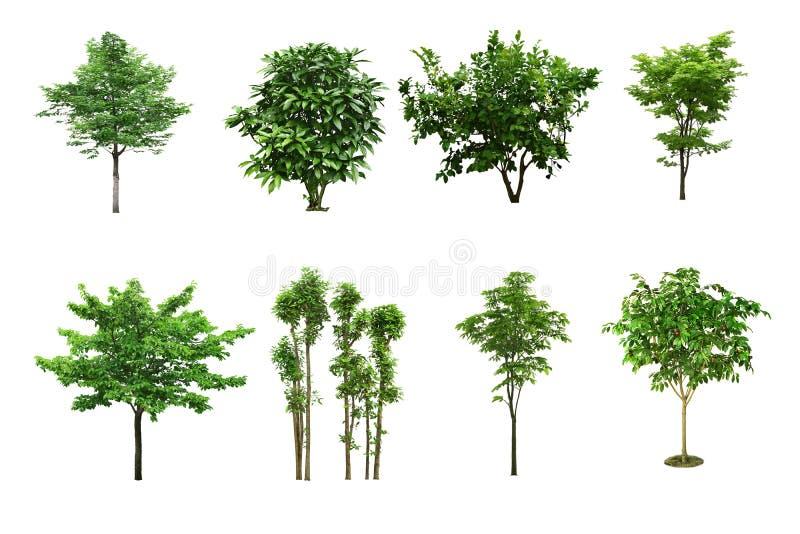 Insieme dell'albero isolato su fondo bianco immagine stock