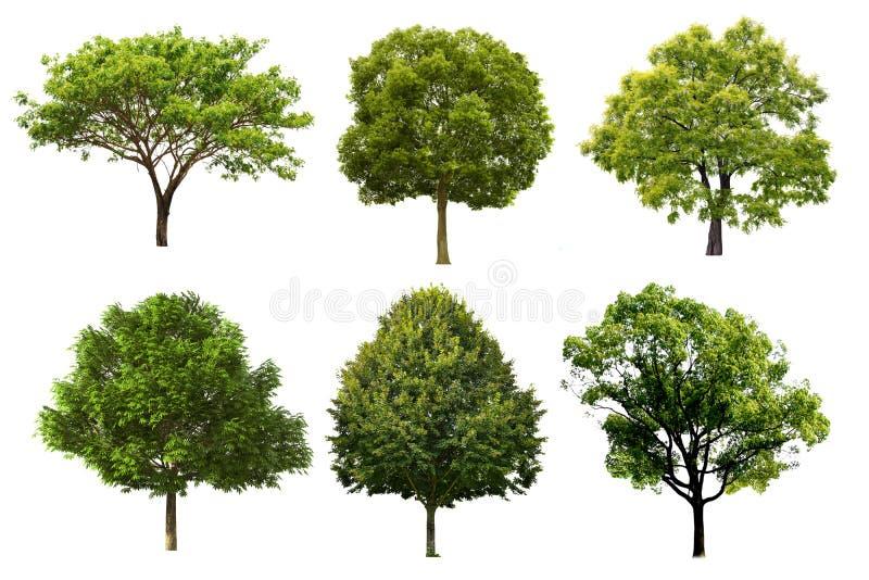 Insieme dell'albero isolato su fondo bianco fotografia stock
