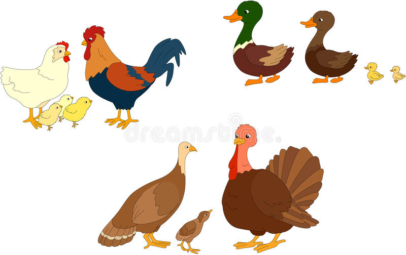 Insieme dell'anatra, anatroccolo, maschio, gallo, gallina, pulcini, madre del tacchino, illustrazione di stock