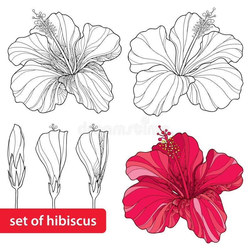 Insieme dell'ibisco cinese o del hibiscus rosa sinensis su fondo bianco Simbolo del fiore delle Hawai illustrazione vettoriale