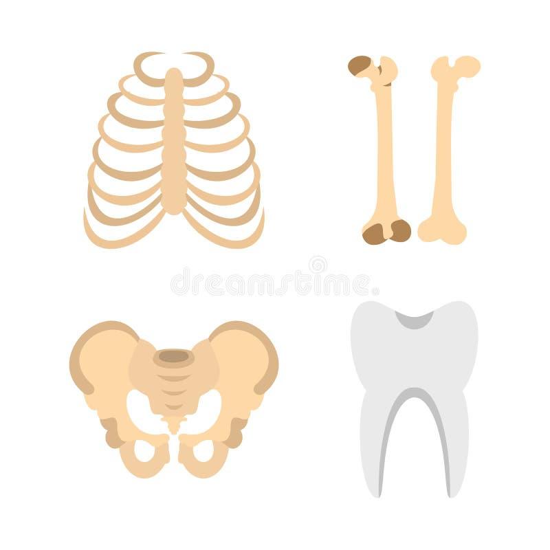 Insieme dell'icona delle ossa dell'essere umano, stile piano illustrazione vettoriale