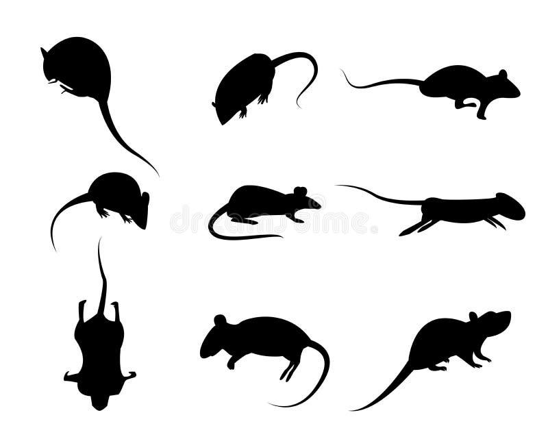 Insieme dell'icona nera del ratto della siluetta, vettore isolato su backg bianco illustrazione vettoriale