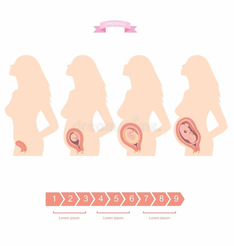 Insieme dell'illustrazione di una siluetta di una donna incinta con un embrione illustrazione vettoriale