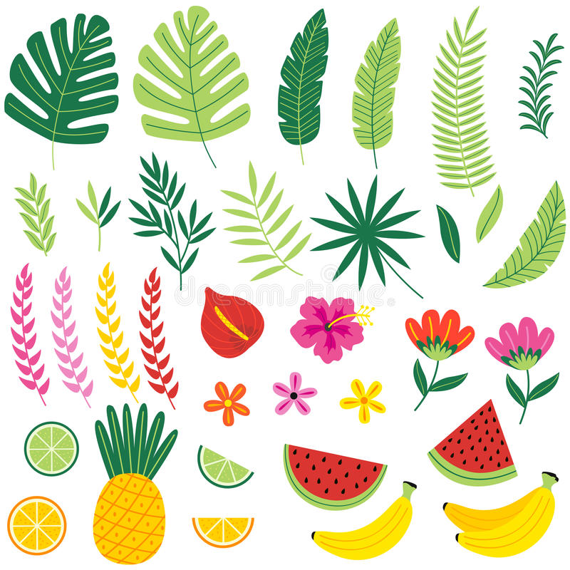 Insieme dell'isolato di con le piante tropicali ed i frutti illustrazione vettoriale