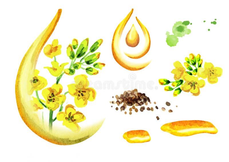 Insieme dell'olio di colza Illustrazione dell'acquerello, isolata su fondo bianco royalty illustrazione gratis