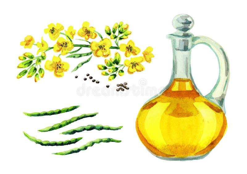 Insieme dell'olio di colza Illustrazione disegnata a mano dell'acquerello, isolata su fondo bianco illustrazione di stock