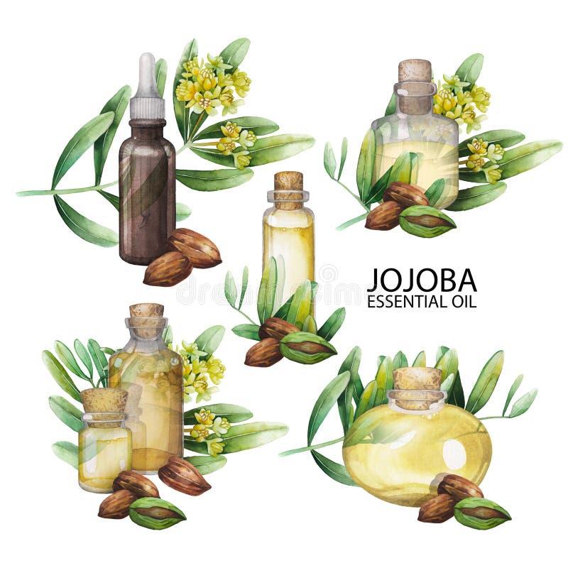 Insieme dell'olio di jojoba dell'acquerello illustrazione di stock