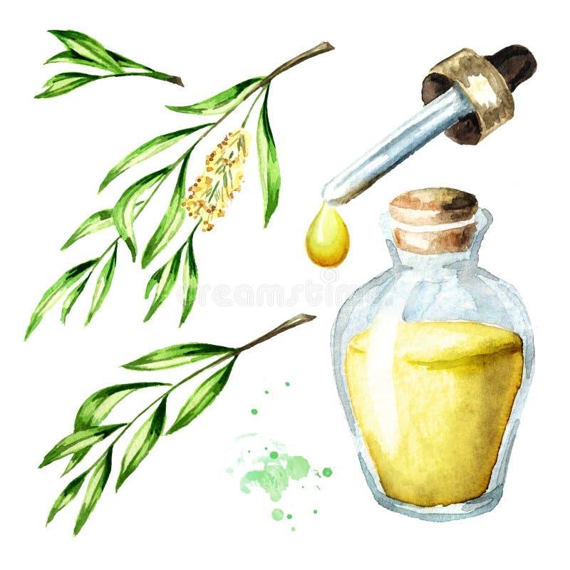Insieme dell'olio essenziale dell'albero del tè Pianta dei cosmetici e medicinale, illustrazione disegnata a mano dell'acquerello illustrazione vettoriale