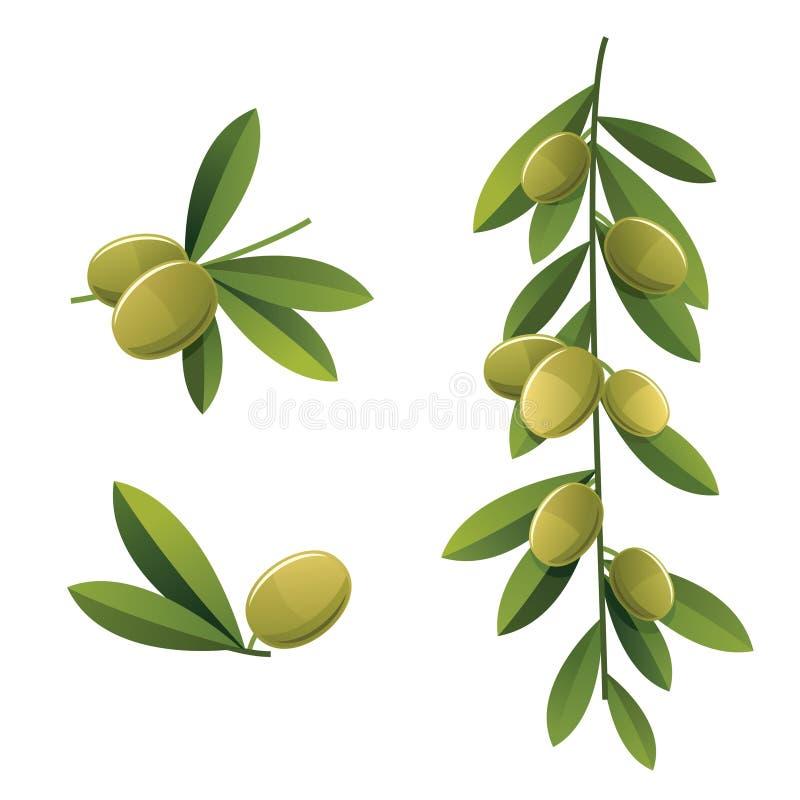 Insieme dell'oliva verde royalty illustrazione gratis