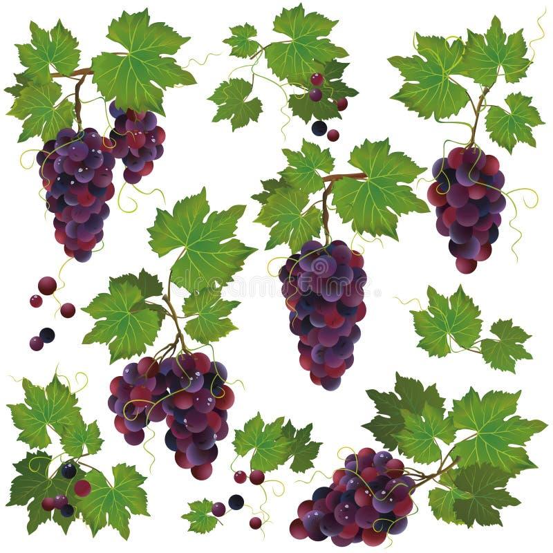 Insieme dell'uva nera isolato su priorità bassa bianca illustrazione vettoriale