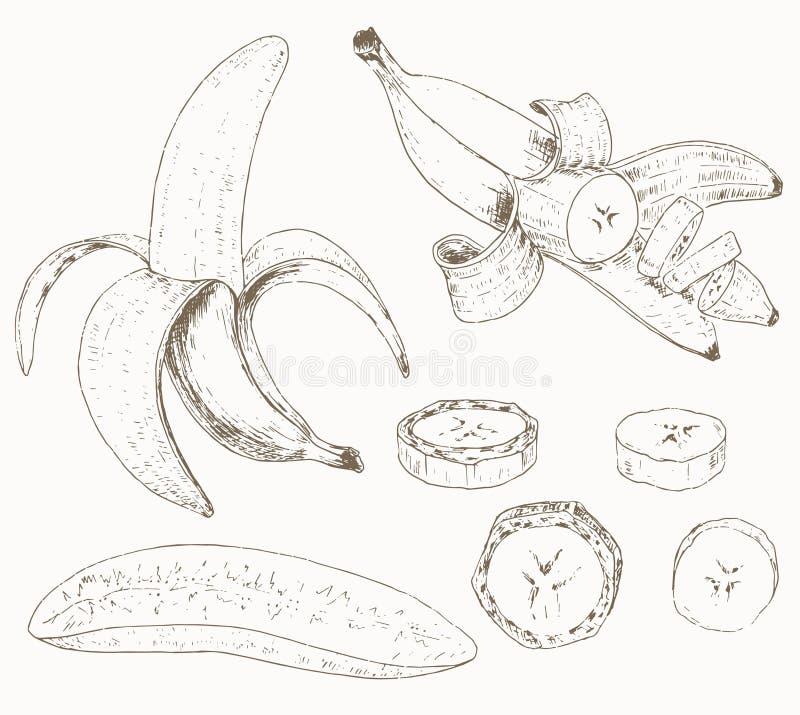 Insieme della banana illustrazione vettoriale