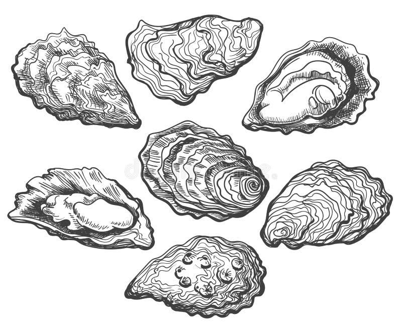 Insieme della conchiglia di ostrica illustrazione di stock