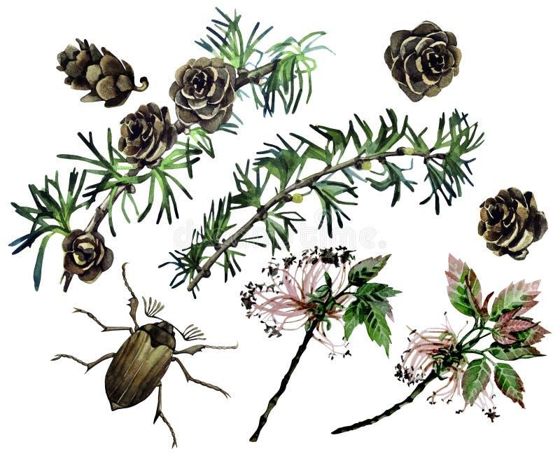Insieme della foresta dell'acquerello royalty illustrazione gratis
