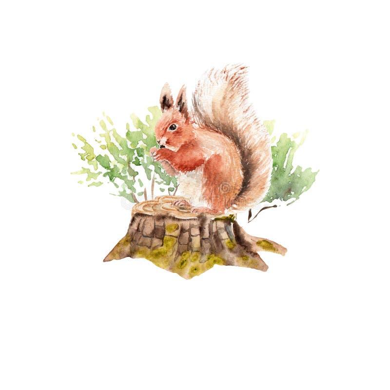Insieme della foresta dell'acquerello: scoiattolo su un ceppo illustrazione vettoriale