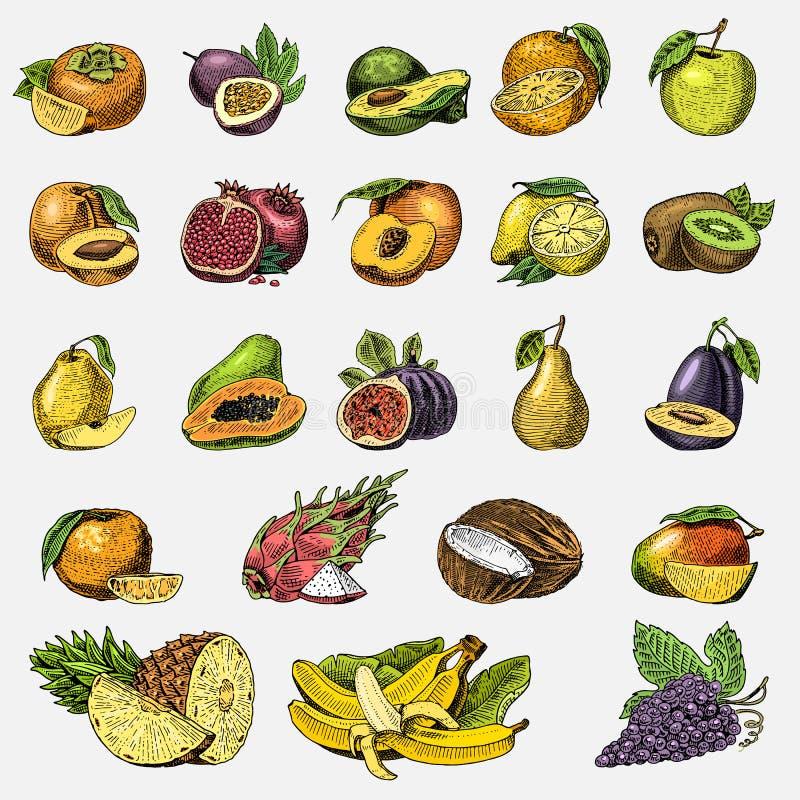 Insieme della frutta fresca disegnata a mano e incisa, dell'alimento vegetariano, delle piante, dell'arancia d'annata e della mel illustrazione vettoriale
