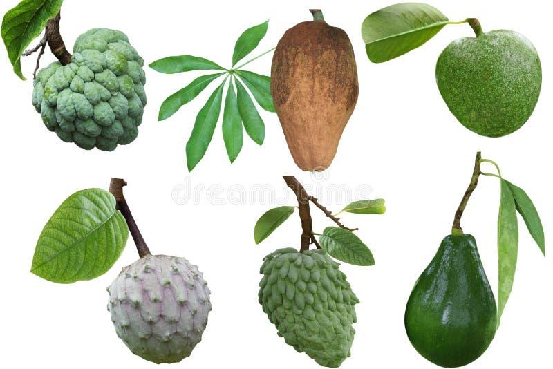 Insieme della frutta tropicale fotografie stock