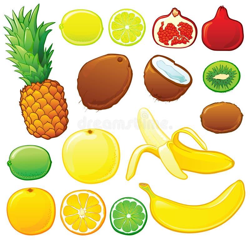 Insieme della frutta tropicale illustrazione vettoriale