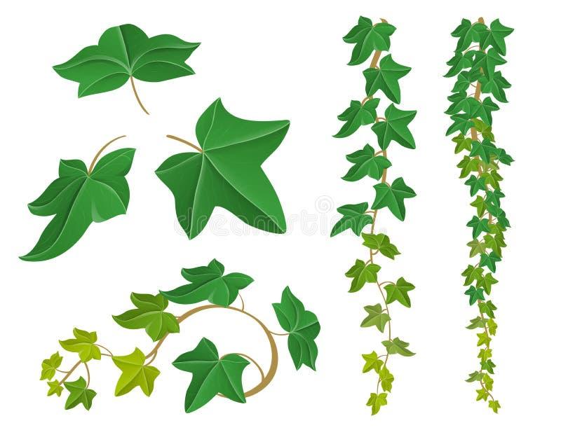 Insieme della pianta dell'edera per progettazione della natura royalty illustrazione gratis