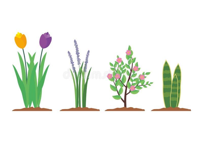 Insieme della pianta dell'interno ed all'aperto di vettore della pianta, della Camera illustrazione vettoriale