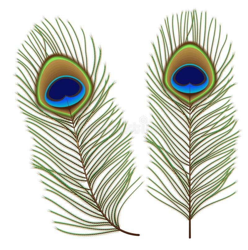 Insieme della piuma del pavone isolato su bianco royalty illustrazione gratis