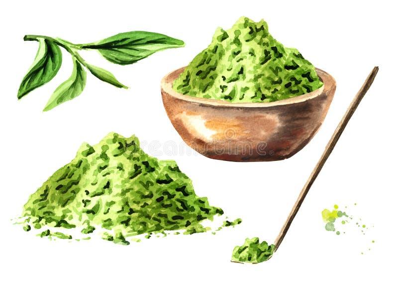 Insieme della polvere del tè di Matcha, in ciotola di legno, con le foglie di tè verdi ed il cucchiaio di legno Illustrazione dis illustrazione di stock