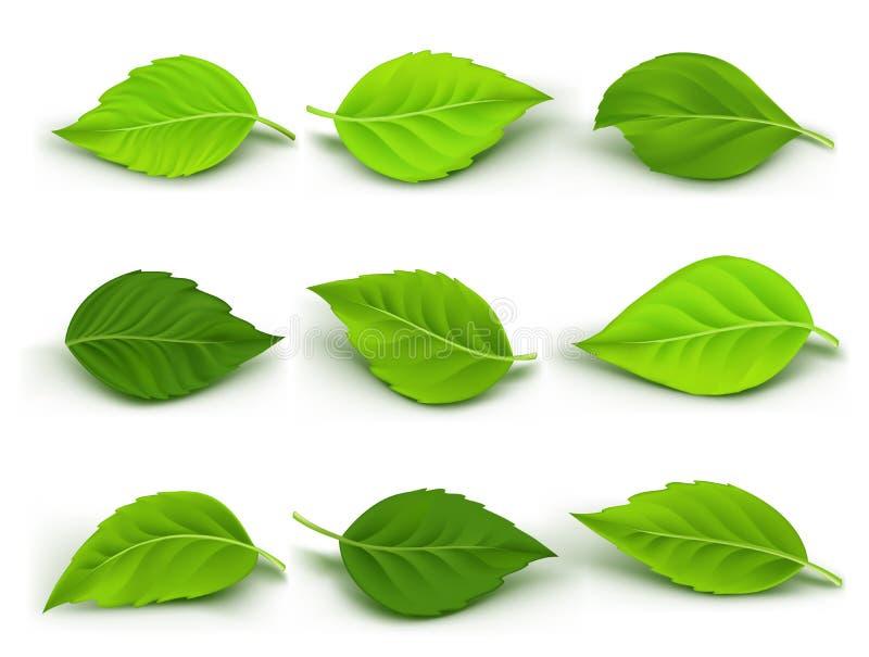 Insieme della raccolta realistica delle foglie verdi illustrazione di stock