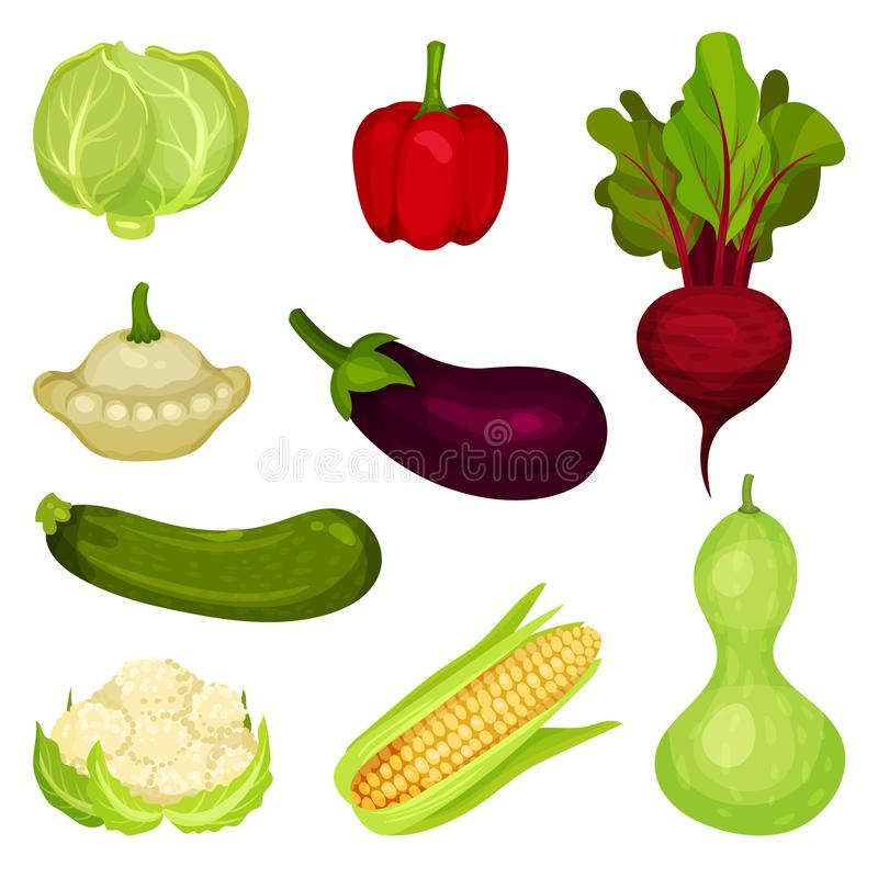 Insieme della verdura fresca Alimento sano Prodotti di fattoria naturali Ingredienti per insalata Elementi grafici per il manifes illustrazione di stock