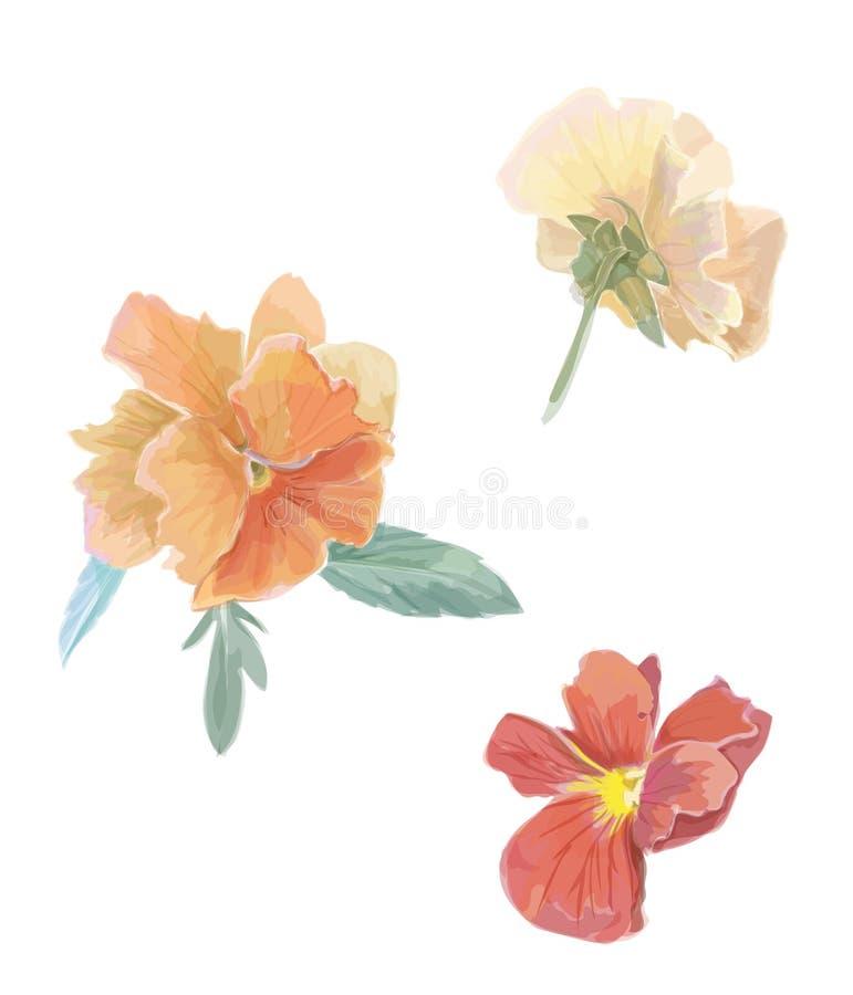Insieme della viola della viola dei fiori Vettore dell'acquerello illustrazione di stock
