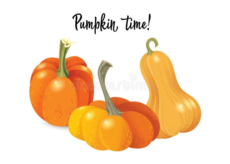 Insieme della zucca di Halloween Zucca arancio differente di dimensioni e di forme isolata su fondo bianco Illustrazione di vetto illustrazione di stock