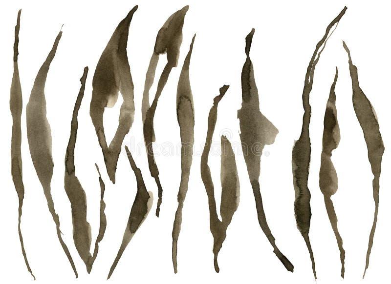 Insieme delle bande della tigre dell'acquerello Bella illustrazione dipinta a mano con le bande animali isolate su fondo bianco p illustrazione vettoriale