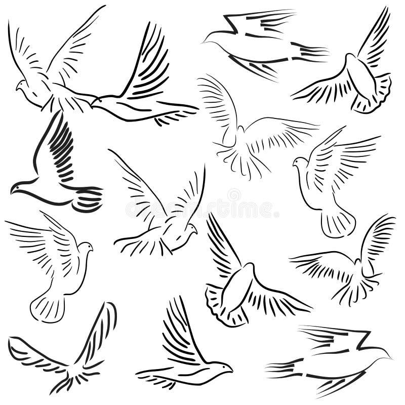 Insieme delle colombe bianche di vettore. royalty illustrazione gratis