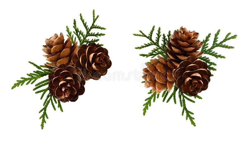Insieme delle disposizioni di Natale con i coni ed i ramoscelli sempreverdi fotografia stock libera da diritti